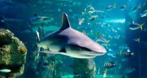 sea-life-sydney
