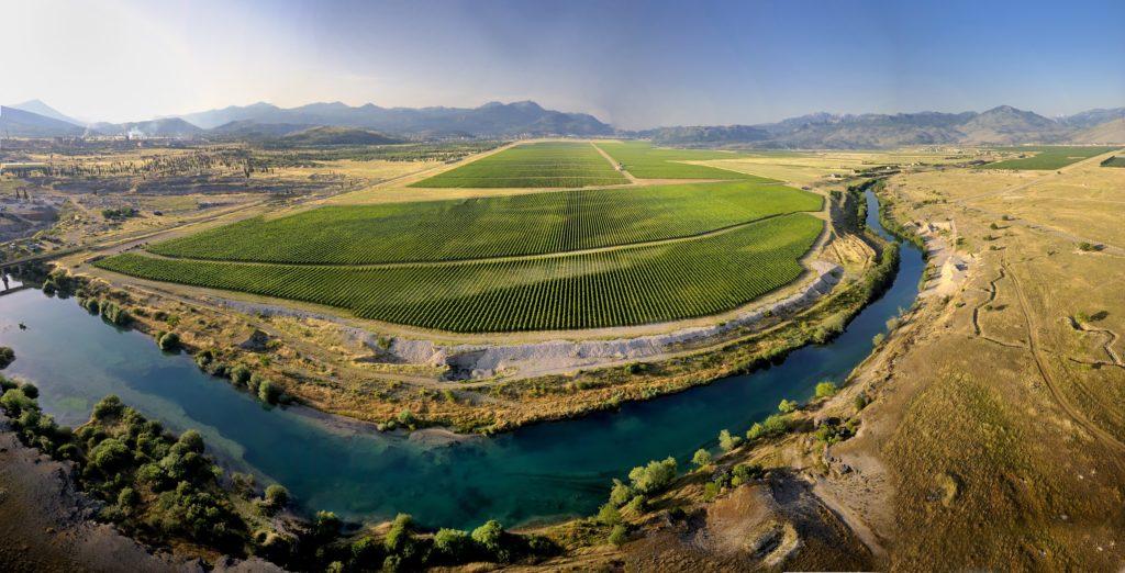 plantaže_wineyard