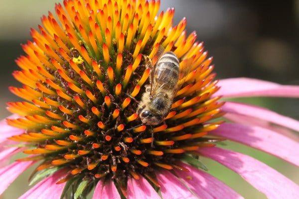 maribor-pohorje-world-bee-day