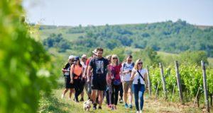 croatia_istria_wine_walk