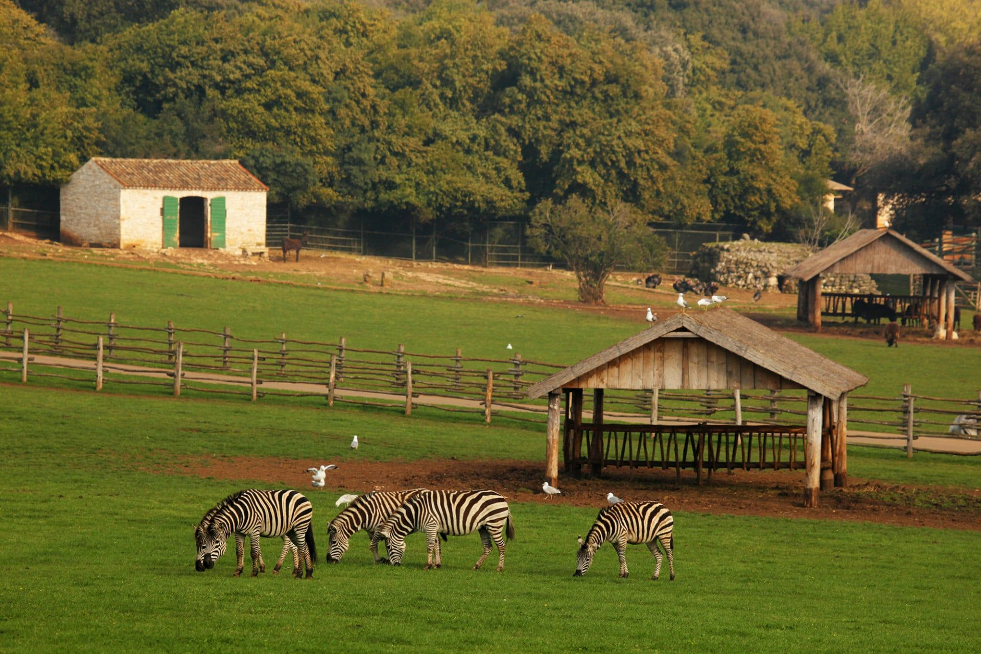 safari_park_brijuni