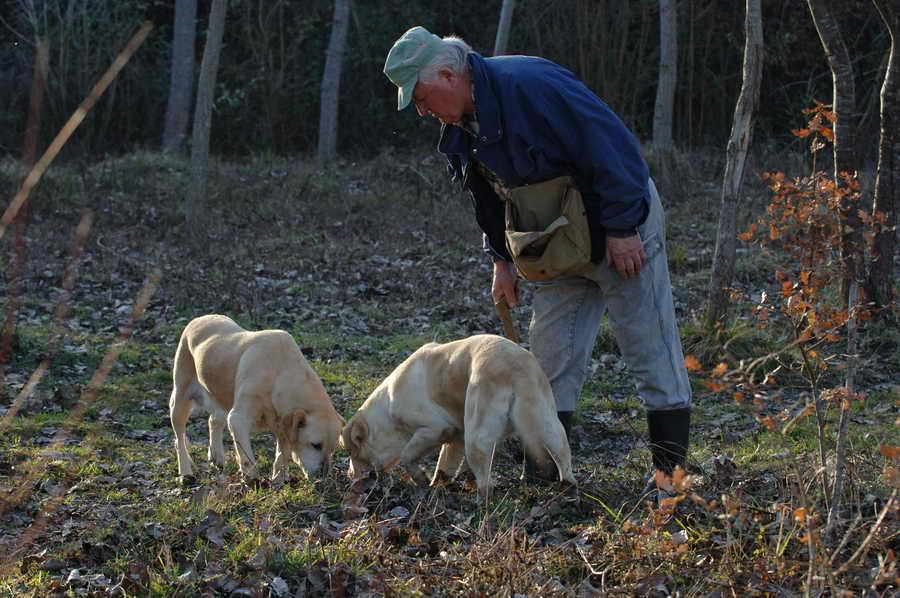truffle, hunting