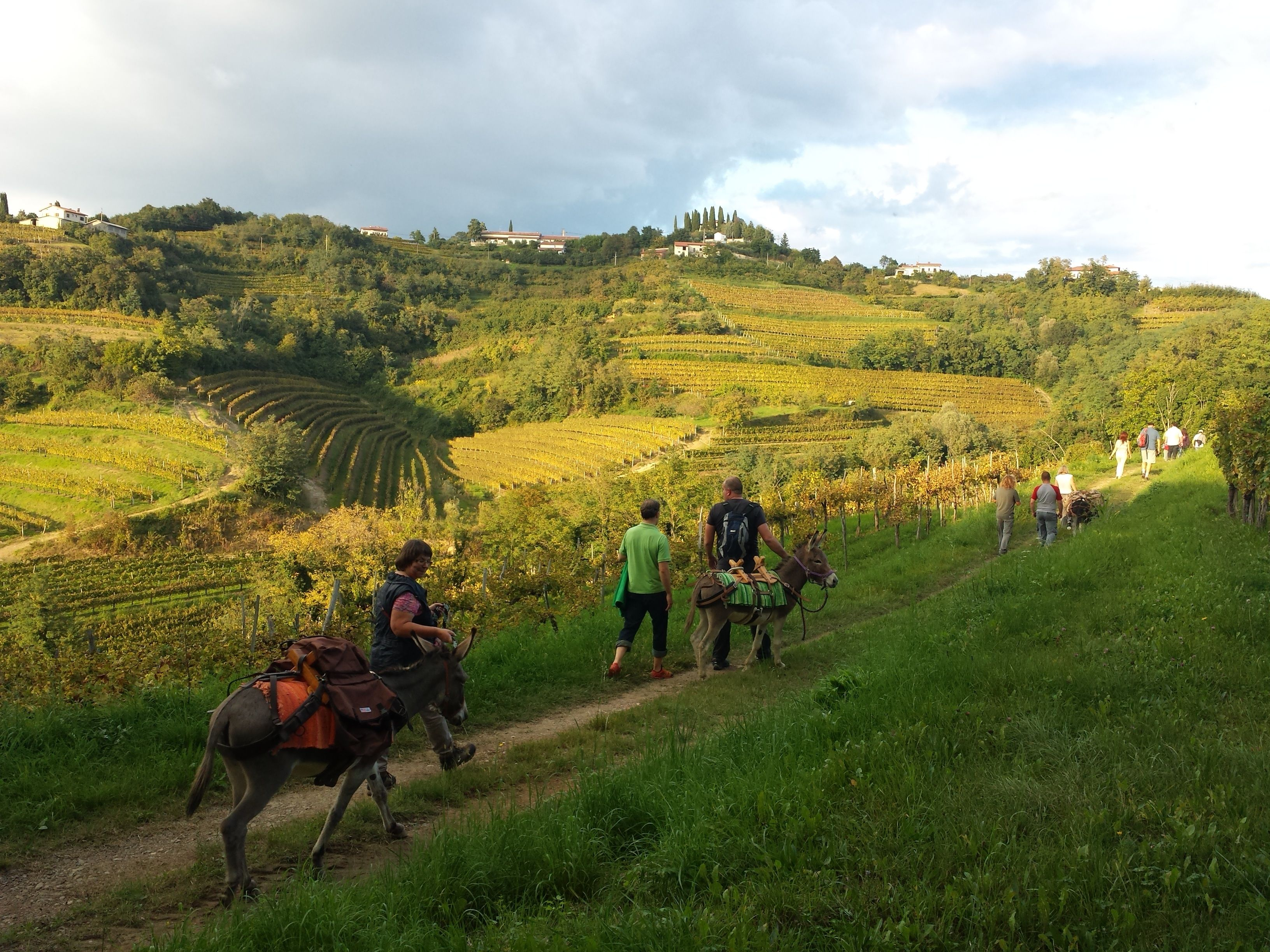 trekking, with, donkeys, through, brda, region