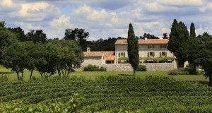 villa, vinogradi