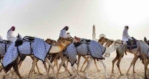 dubai, culture, camels
