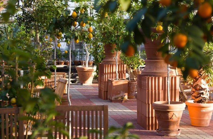 zitrus-garden