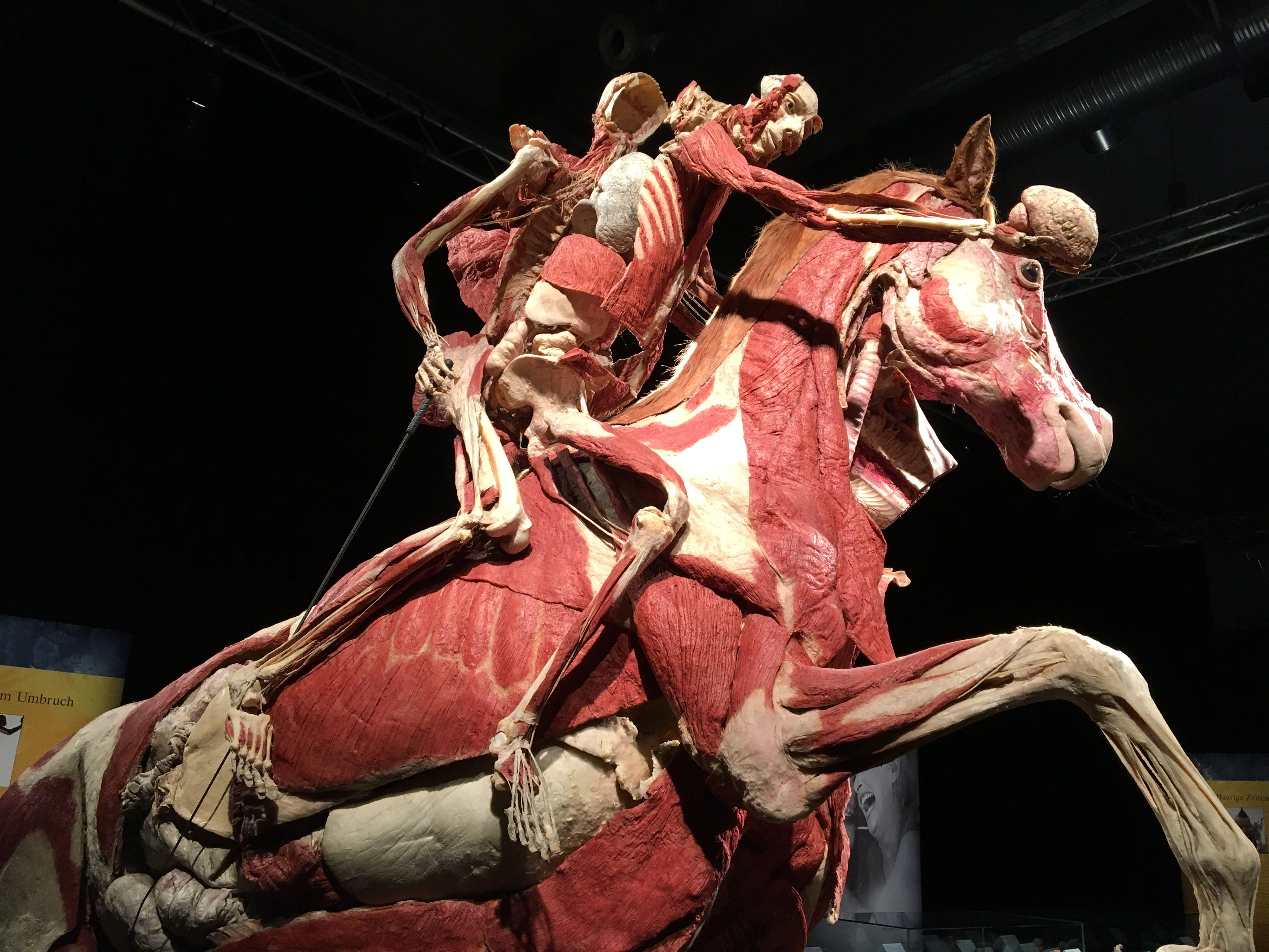 Body Worlds Vital Kongres Europe Events And Meetings Industry Magazine