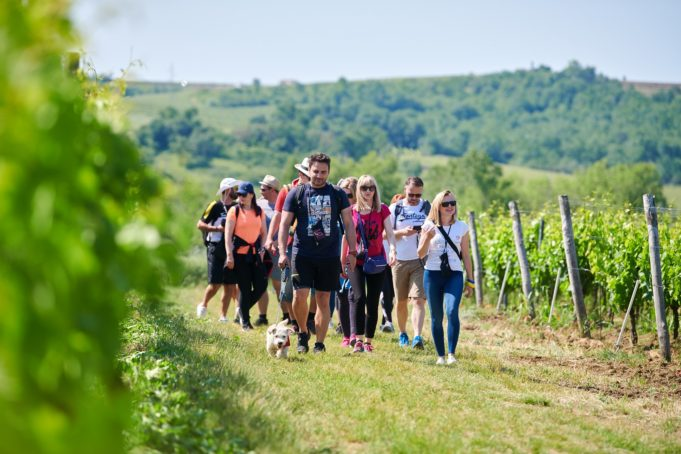 croatia_istria_wine_walk
