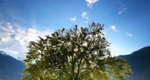 bohinj_lake