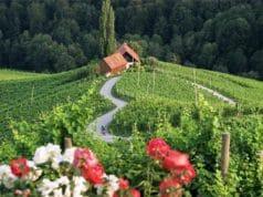 maribor_svecina-vineyards