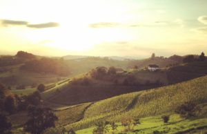 maribor_mulec_winery