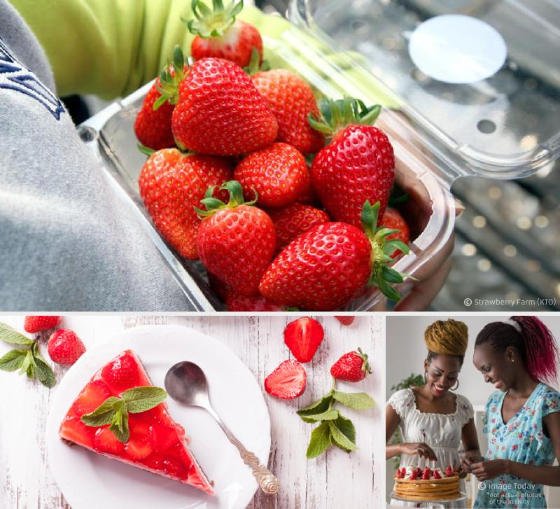 strawberry_farm_korea
