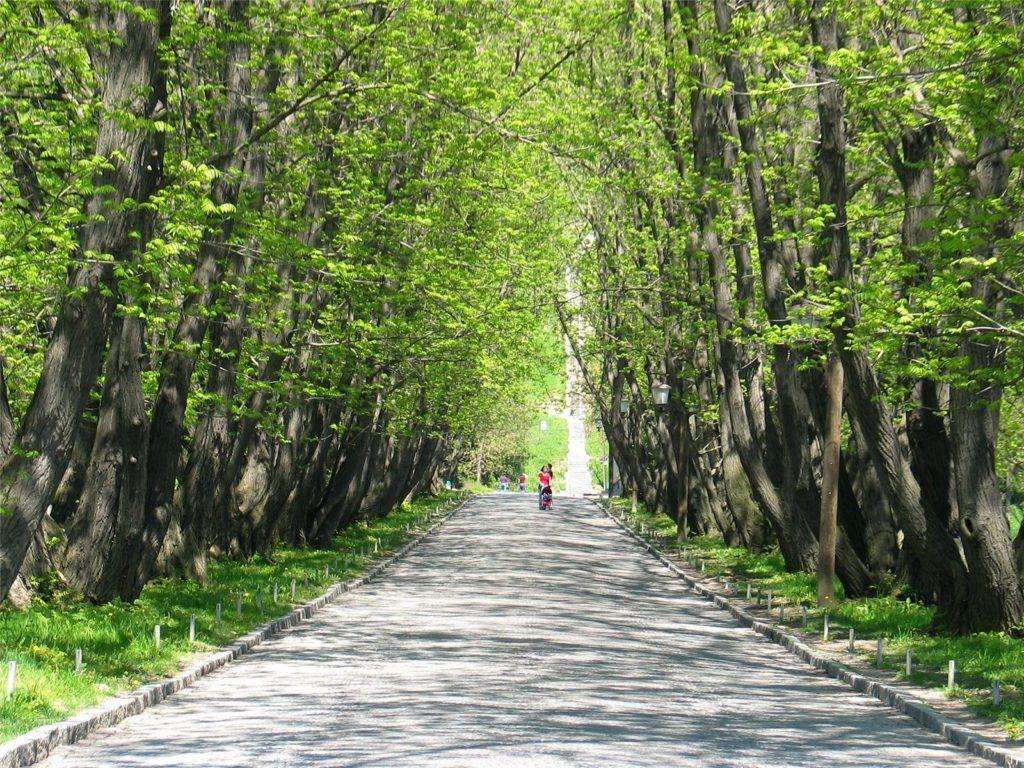 maribor_avenue
