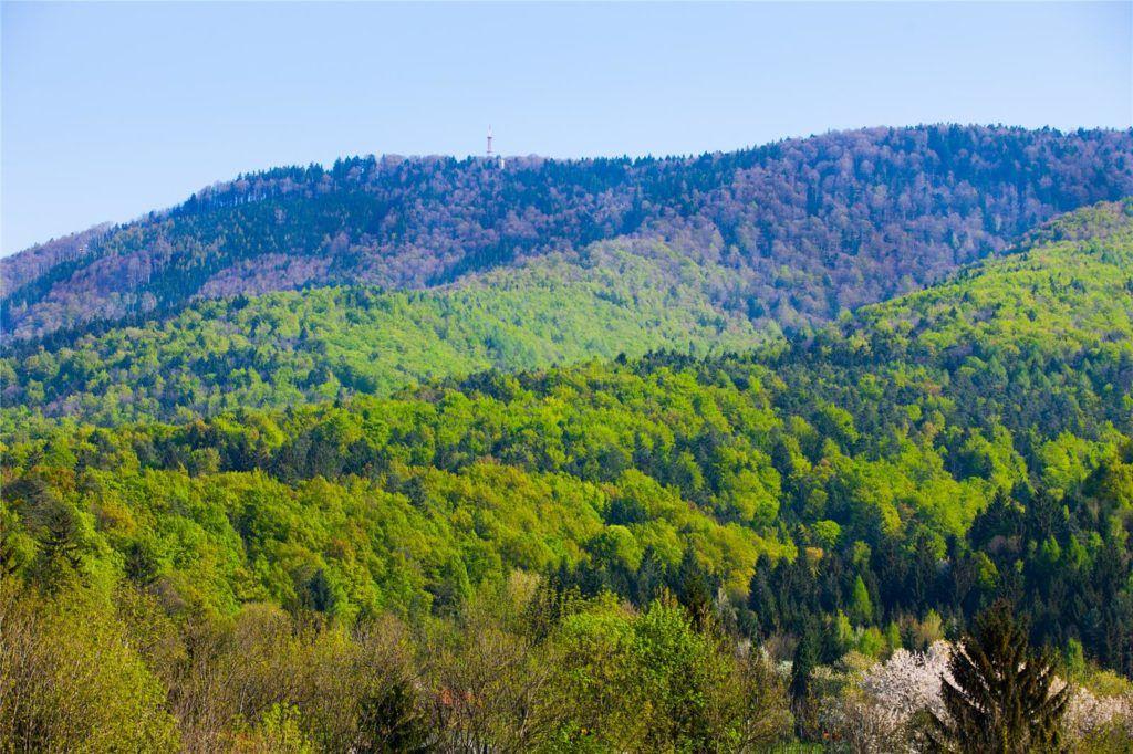 maribor_betnava_forest
