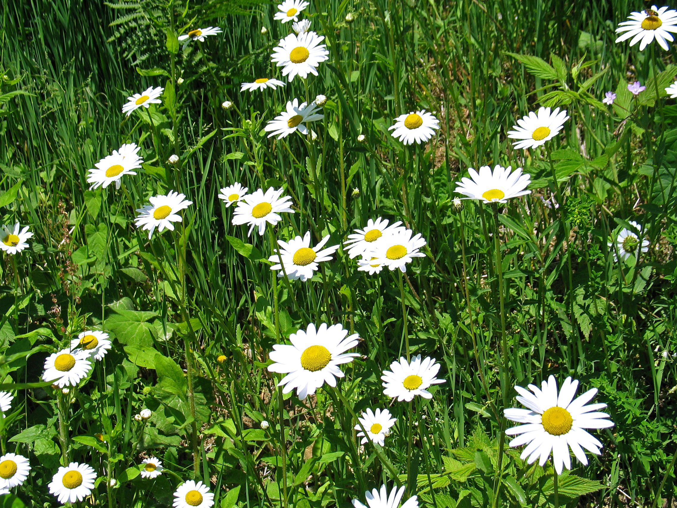 flowers_maribor