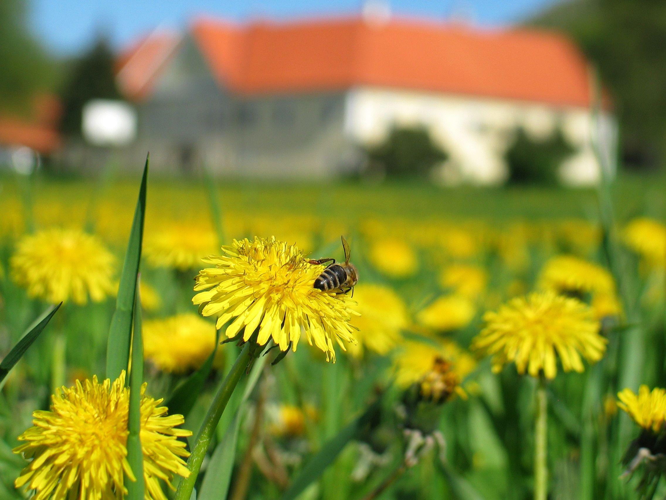 Maribor - Bees