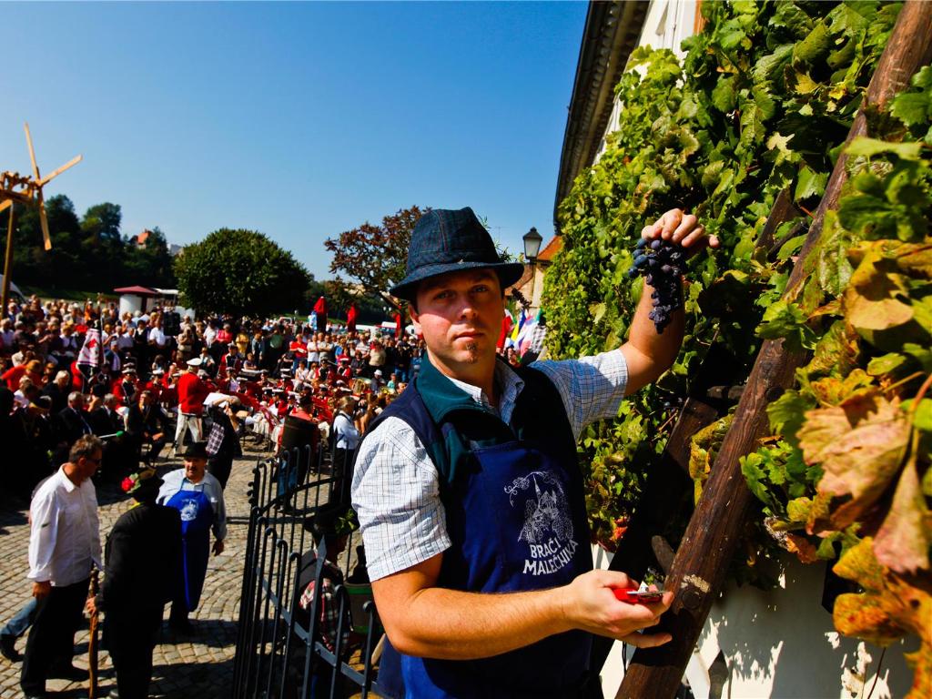 maribor_old_vine_festival_harvest