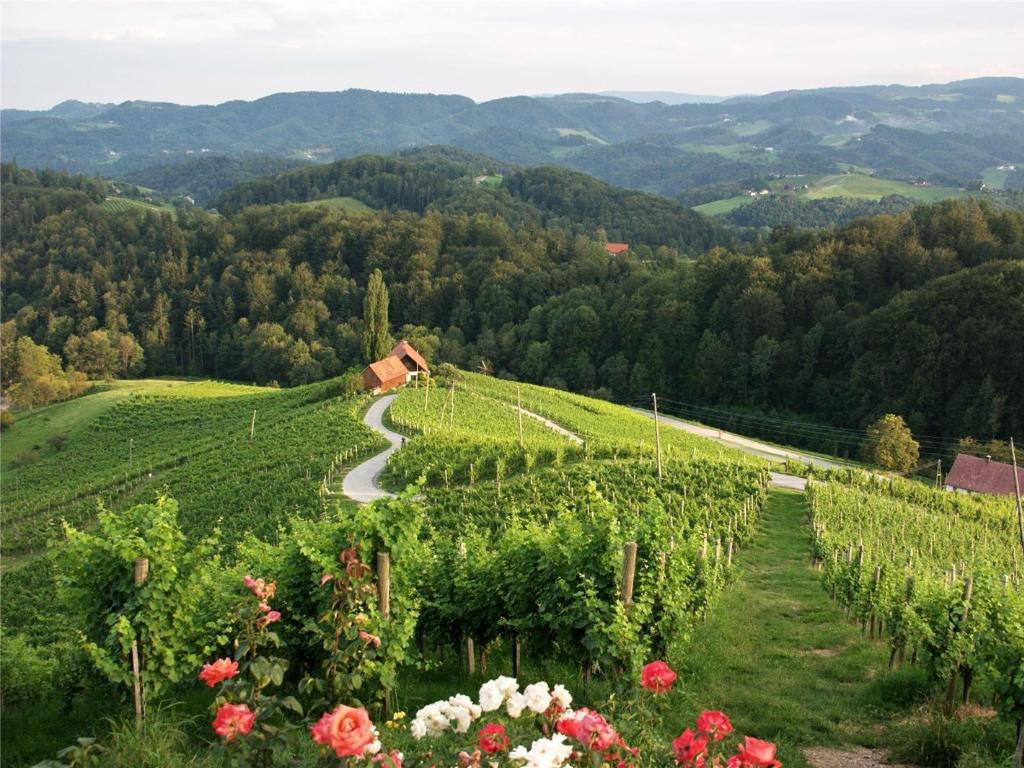 maribor_vineyards_svecina