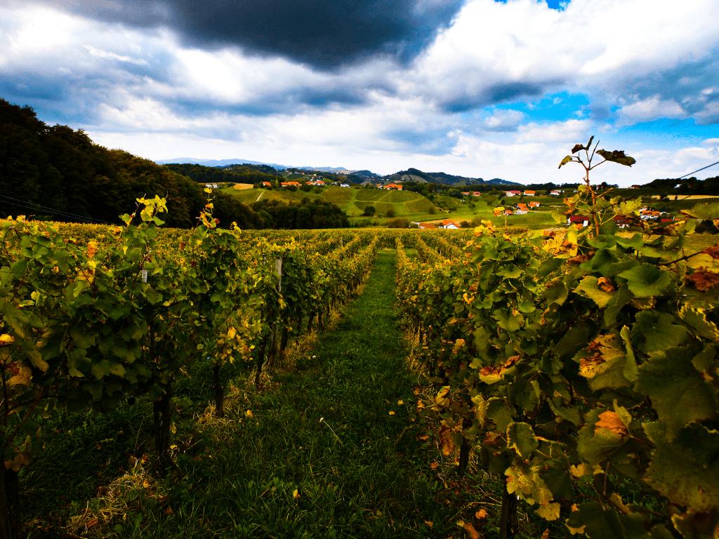 Vodole, wineyards, Maribor