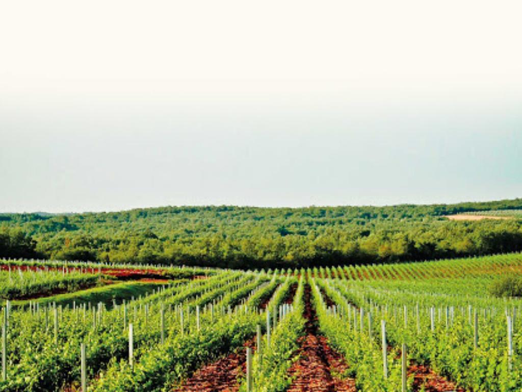 saints_hills_winery