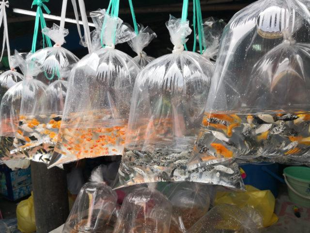 fish-plastic-bag-market-kongres-magazine