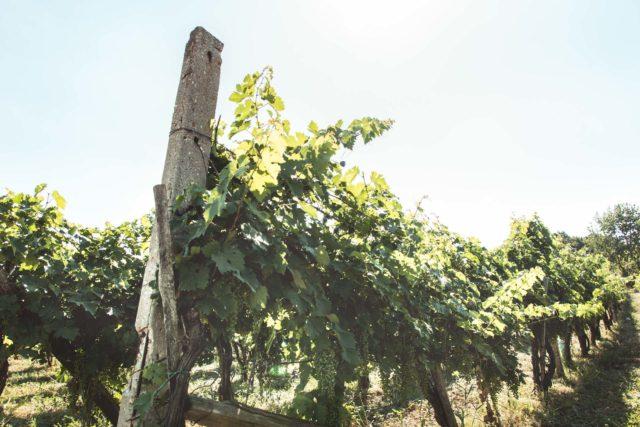 hungary-wine-vineyard-vas-county