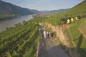 Lower_Austria_vineyard