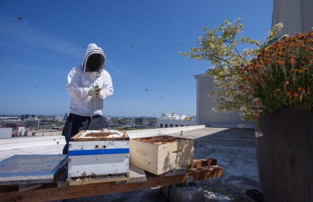 bees-honey-beekeeping-bratislava