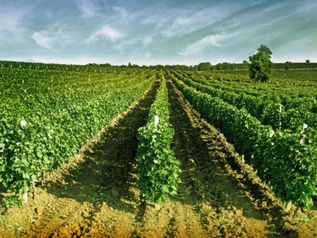 stobi_winery