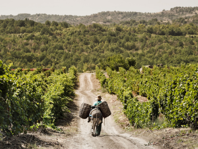 tikves_winery