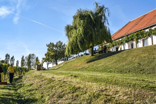 malek_vineyard_cottage
